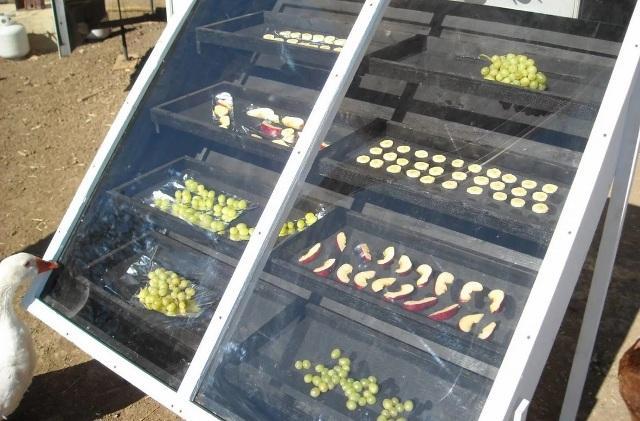 Какая сушилка для овощей и фруктов лучше