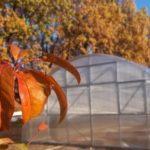 Как обработать теплицу осенью после сбора урожая