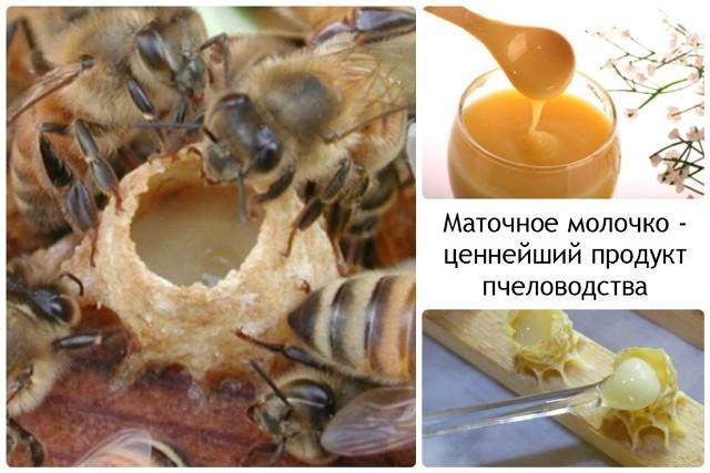Пчелиное маточное молочко: польза и вред как принимать.