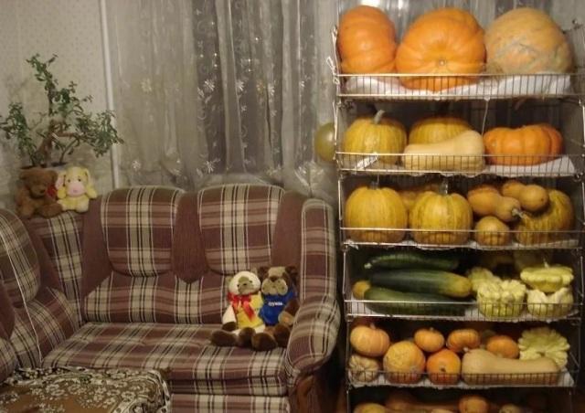 Как сохранить тыкву на зиму в домашних условиях в квартире