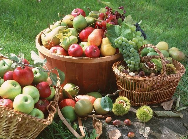 Как подготовить плодовые деревья и кусты к зиме