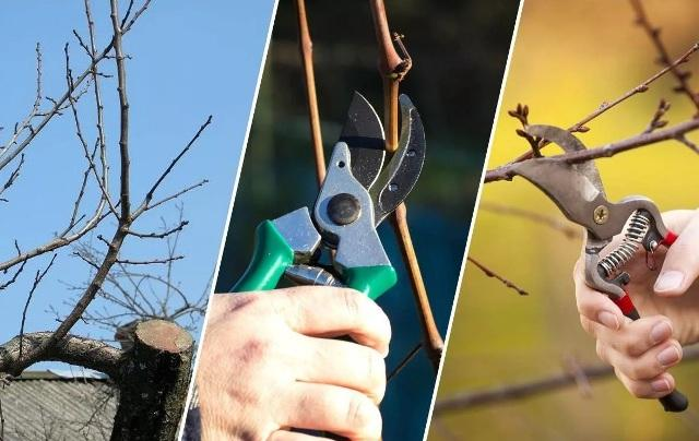 Как подготовить плодовые деревья к зиме: обрезка