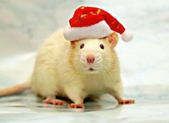 Салат на Новый год в виде крысы