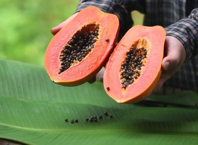 фрукт папайя: полезные свойства и вред для мужчин