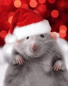 Что приготовить на Новый год Крысы 2020
