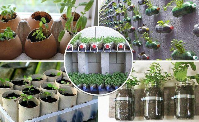 В чем выращивать рассаду