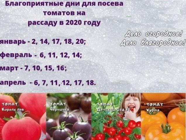 Как вырастить рассаду помидоров в домашних условиях: лунный календарь