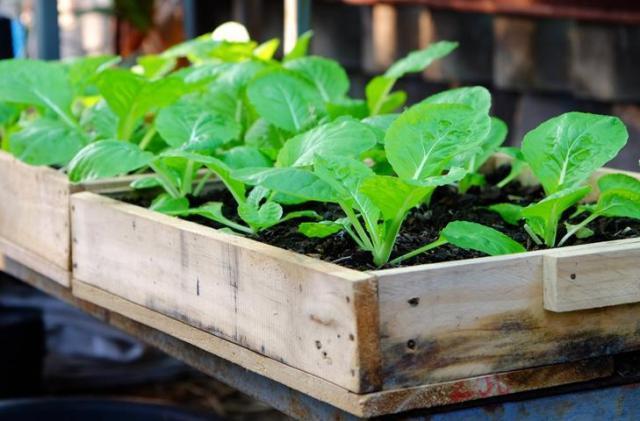 В чем выращивать рассаду: ящики