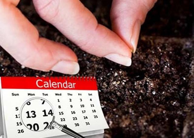 Какую рассаду сажают в феврале: благоприятные дни
