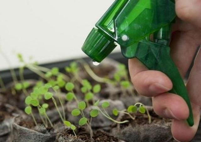 Как правильно поливать рассаду в торфяных горшочках