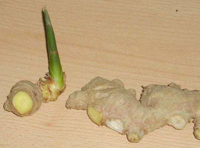 Как размножить из корня купленного в магазине