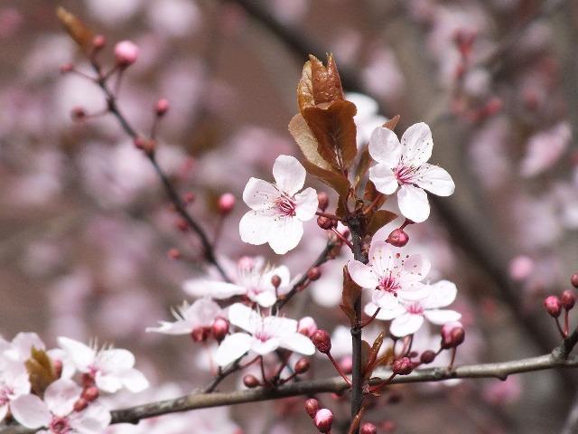 Как цветет в домашних условиях