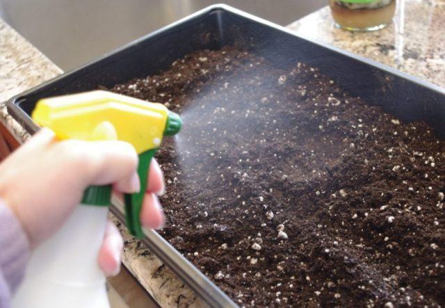 Как выращивать в домашних условиях