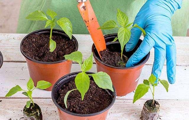 Как выращивать дома