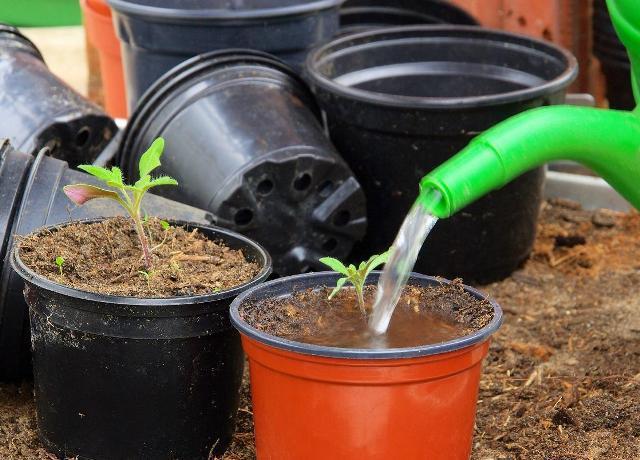 Что посадить на рассаду в марте