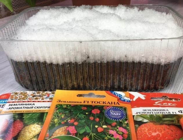 Посев земляники в домашних условиях