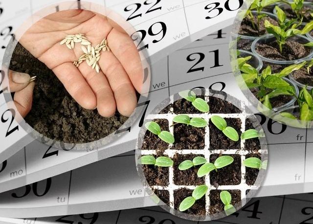 Когда посадить рассаду в марте