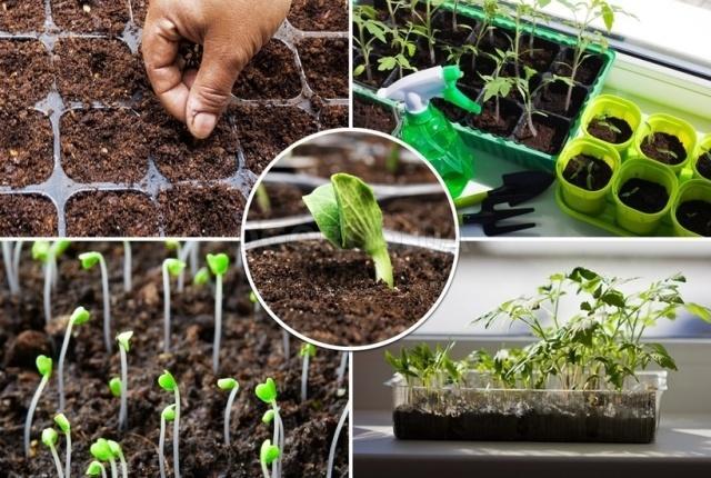 Какую рассаду посадить в марте