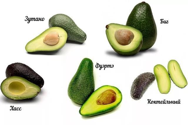 Как вырастить авокадо из косточки