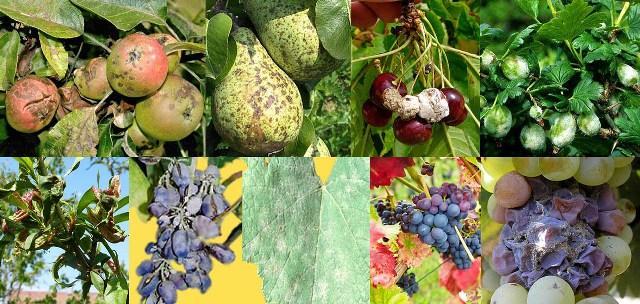 Чем обработать весной от вредителей и болезней