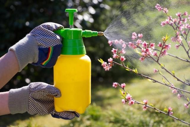 Обработка во время цветения