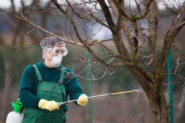 Как правильно обработать плодовые кусты весной