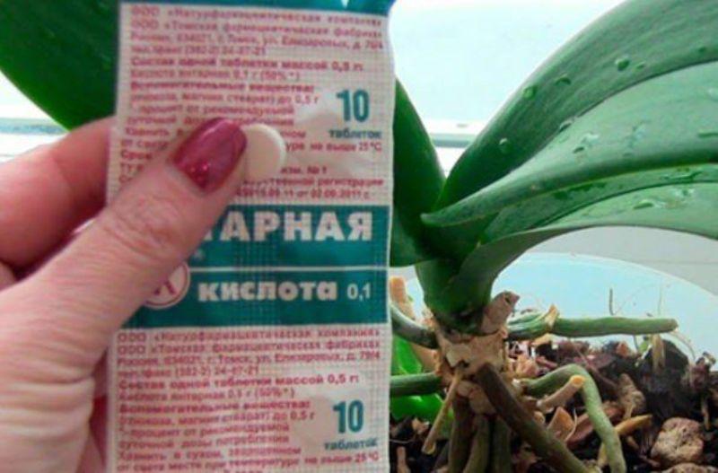 Янтарная кислота: применение для растений