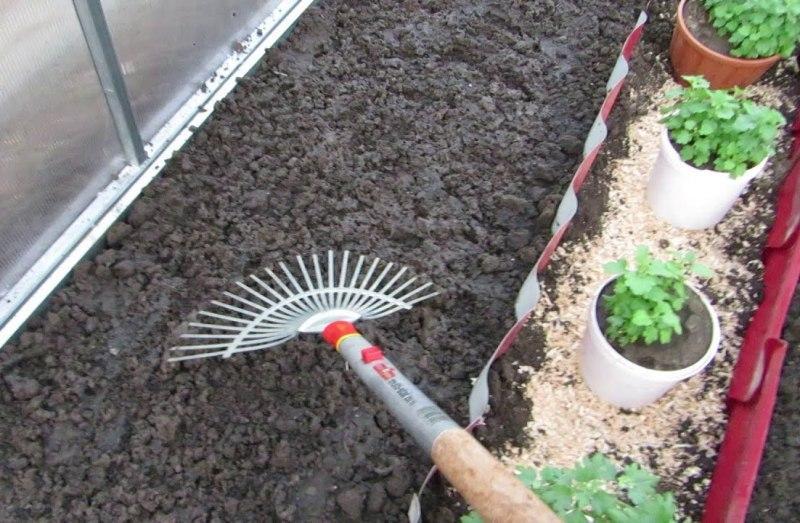 Чем удобрить землю в теплице весной перед посадкой