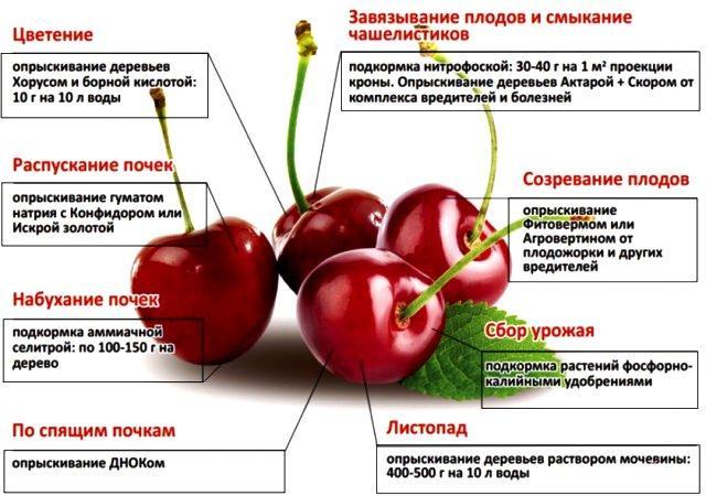 Чем можно обработать плодовые кусты