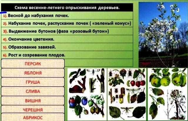 Чем обработать плодовые весной от вредителей и болезней