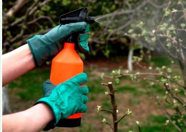 Когда и чем обрабатывать плодовые деревья весной