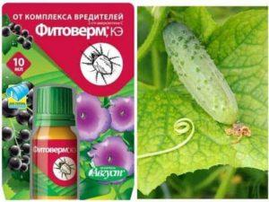 Фитоверм для растений
