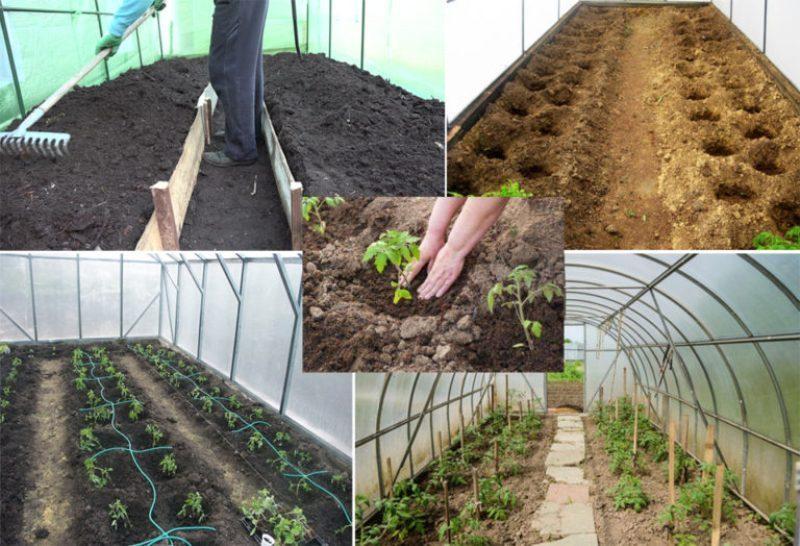 Что положить в лунки при посадке томатов
