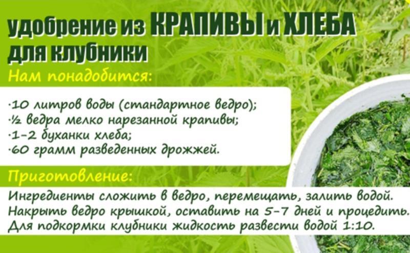 Как подкормить клубнику весной для хорошего урожая