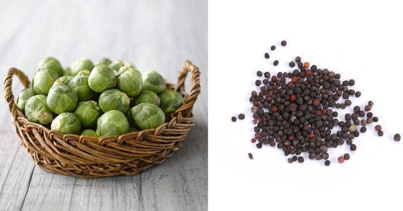 Как выращивать  в грунте