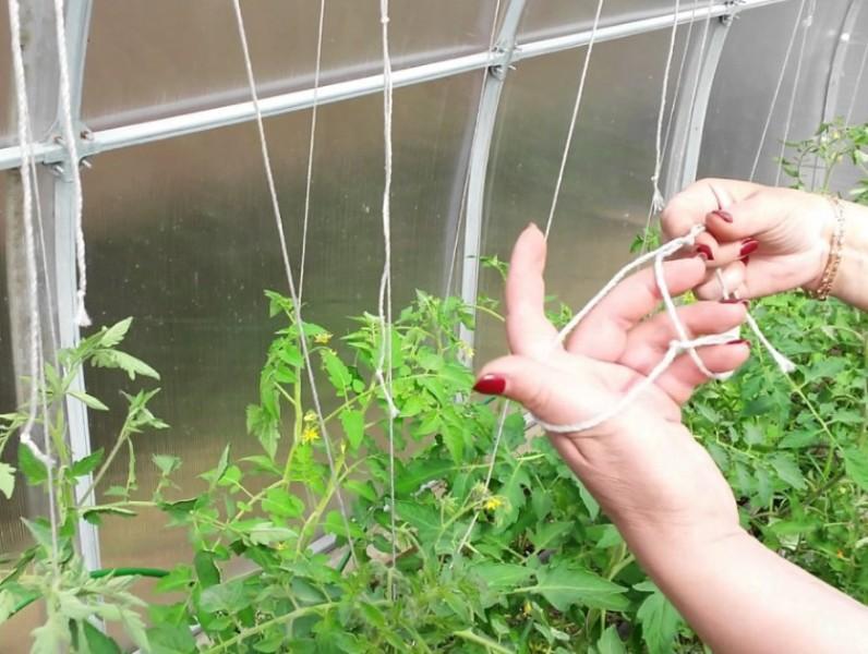 Что необходимо положить в лунки при посадке томатов