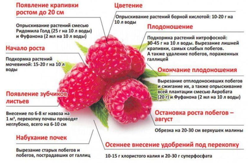 Чем подкормить малину весной