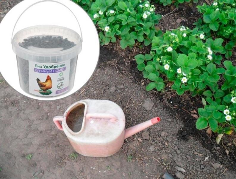 Чем удобрить клубнику весной для хорошего урожая