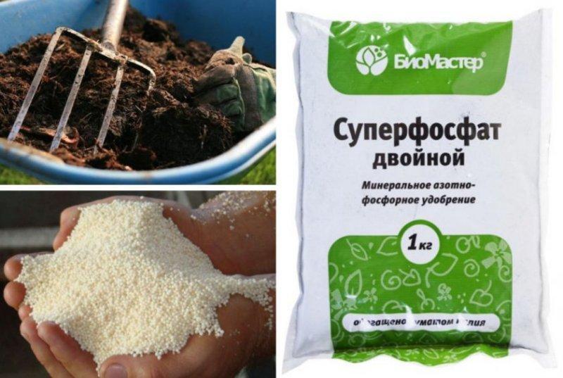 Как подкормить жимолость весной для хорошего урожая
