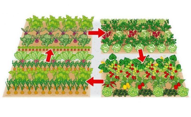 Как сажать в открытый грунт семенами