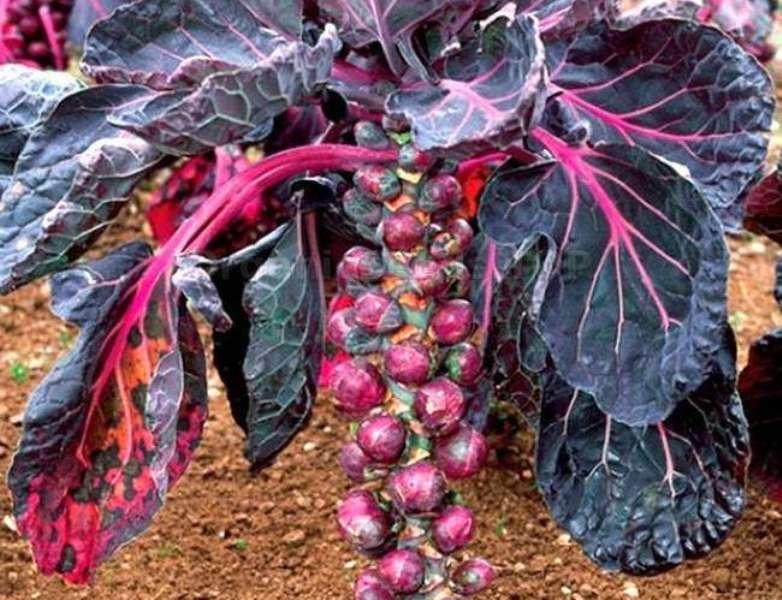 Как выращивать в открытом грунте в регионах