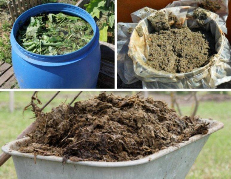 Подкормка для жимолости весной для хорошего урожая