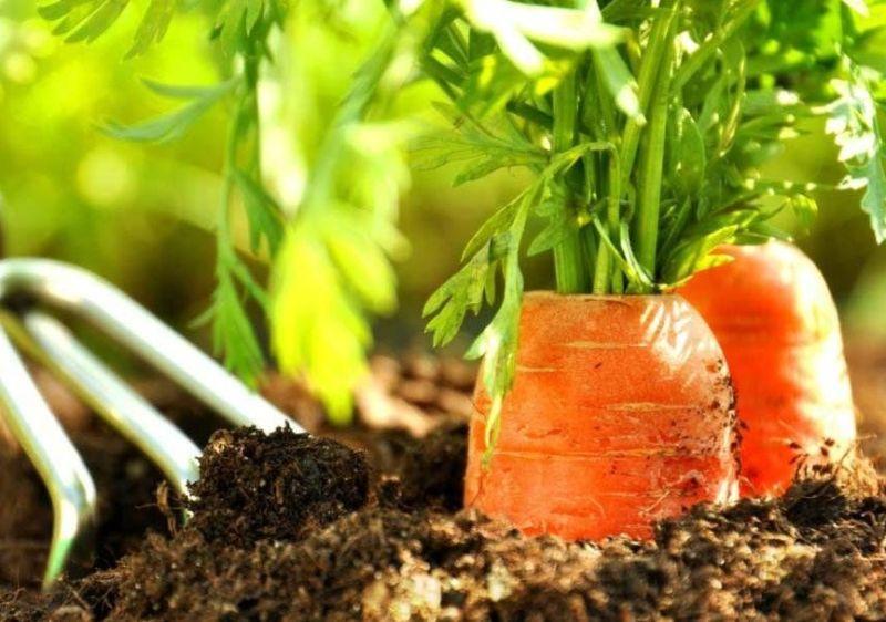 В какую почву посеять весной