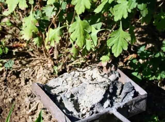 Древесная зола как удобрение для огорода