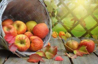 Что можно делать с яблоками