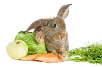 Чем полезно мясо кролика для человека