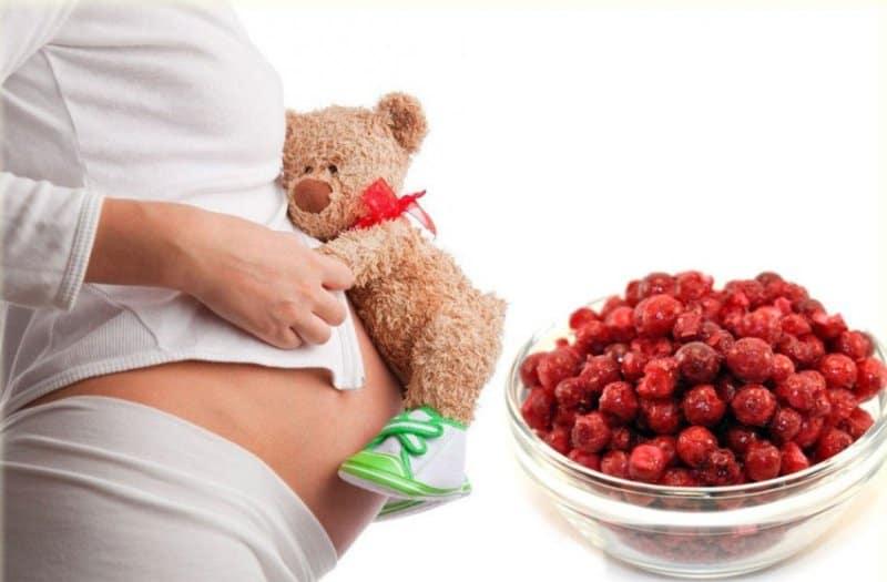 Чем полезна брусника при беременности