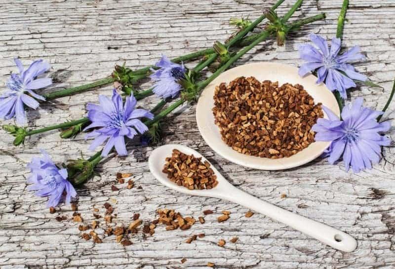 Цикорий польза и вред для здоровья организма
