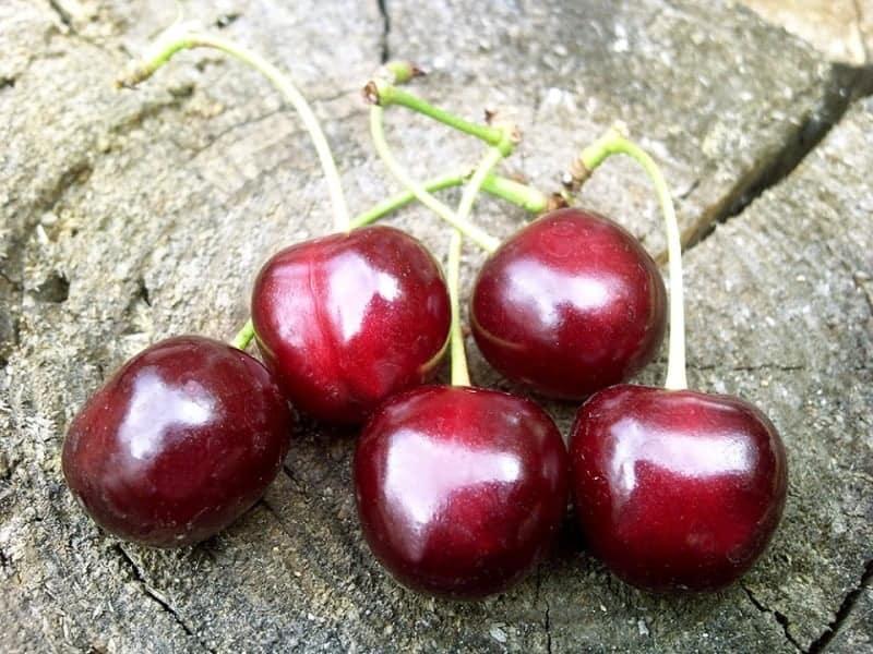 дюки вишне-черешневые гибриды сорт ночка