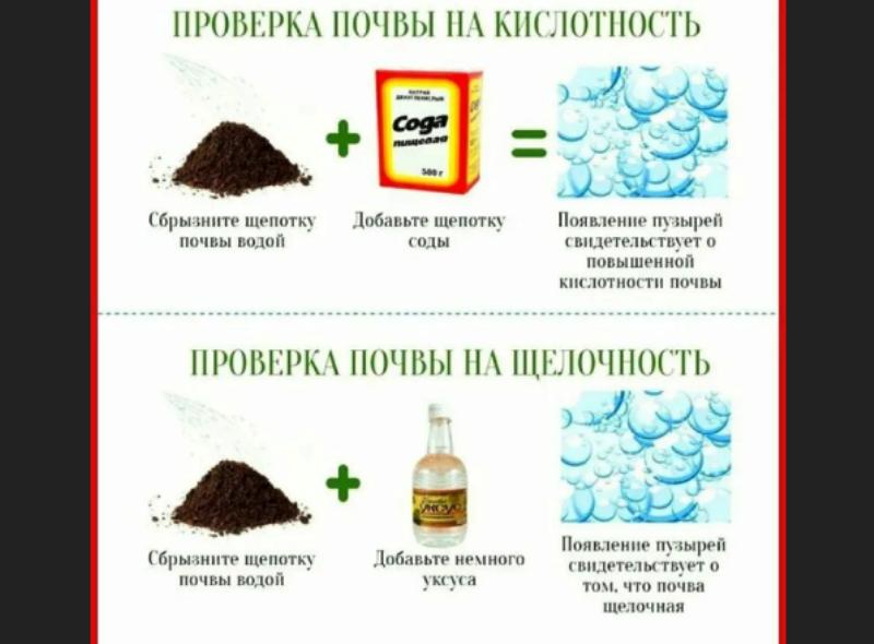 Как узнать кислотность почвы самостоятельно